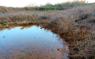 Wildguarder-Hunt-Edges-for-Deer-photo-five-1